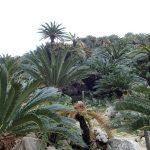 パワースポット スピリチャル的観光スポット沖縄「大石林山」:亜熱帯・自然林コース