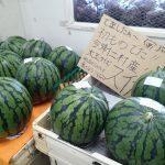 沖縄フルーツ パッションフルーツとパッシフロラ・アラタを食べ比べてみた。