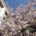 景色が素晴らしい神社・三輪明神は広島市内を一望できる。