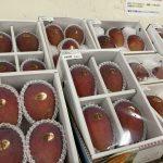 8月はマンゴーの季節!!アップルとキーツの両方がそろい踏み。